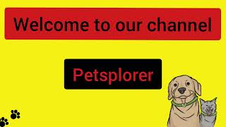 Lhasa Apso puppies delivery | First litter | dog breeding |petsplorer