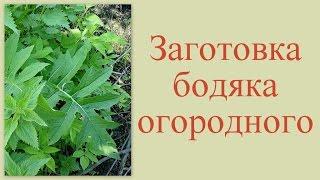 видео Бодяк огородный.Травы.