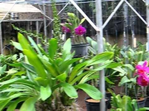 Vườn lan Út Thể