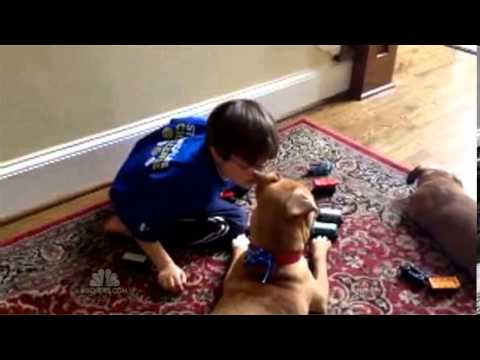 Severely Abused Puppy, Xena, And Autistic Boy, Jonny Hickey, Become Best Friends VIDEO)