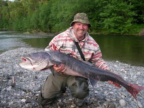 рыбалка тайменя на реке лямпушка