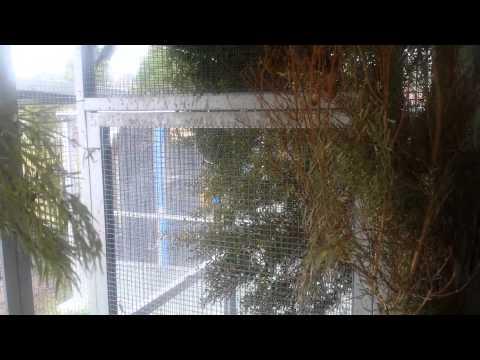 The European Greenfinch: Characteristics, Behavior and ...