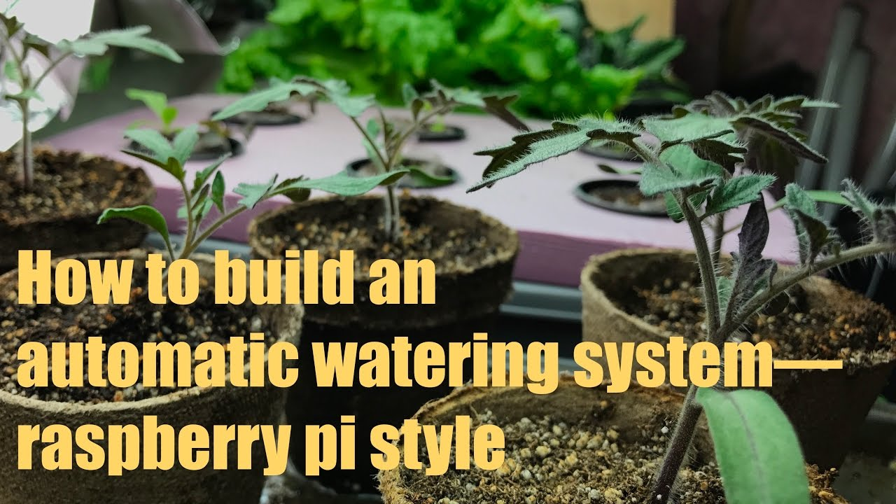 How to build an easy automatic watering system for seedlings using a  Raspberry pi