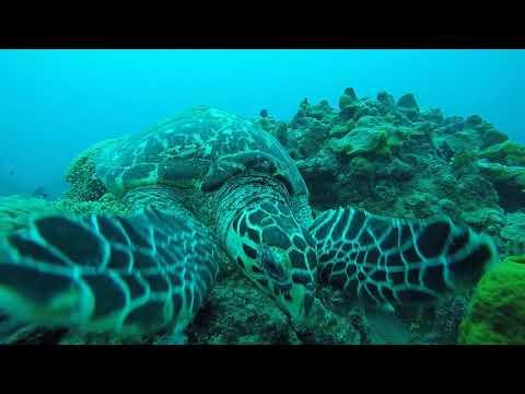 Barbados Dive