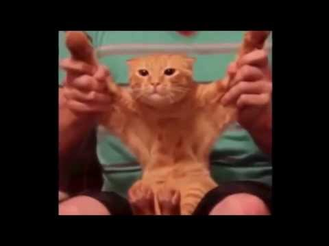 Best Funny New Cat Vines Compilation 2015