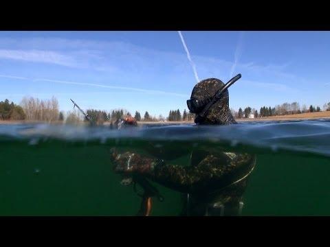 Задержка Дыхания в Подводной Охоте. Spearfishing. Pesca in apnea