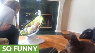 Dog extremely jealous of new baby
