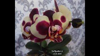 Орхидеи.  30 цветущих орхидей! Обзор. Декабрь 2018.