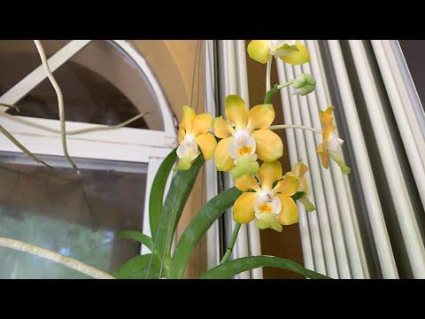 New Orchid Blooms, LIVE Chat, Fertilizing