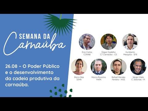 RESUMO 26.08   Semana da Carnaúba - O Poder Público e o desenvolvimento da cadeia da carnaúba.