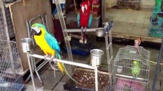 Bird Garden HK - Hong Kong's Bird Market