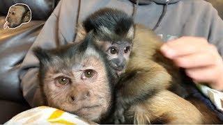Baby Monkey 10000 Subscriber Celebration!