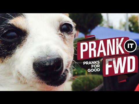 ABUSED DOGS GET SURPRISE OF A LIFETIME   - Prank It FWD - MUST LOVE DOGS