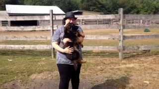 Gsk New Puppy Owner Visit- Akc German Shepherd Puppies!