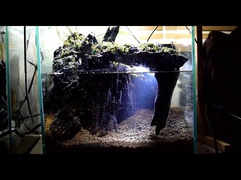 【地底湖レイアウト】 アクアテラリウム水槽立ち上げ 【コケリウム】