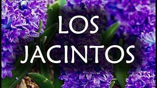 [JARDINERIA] - Los Jacintos