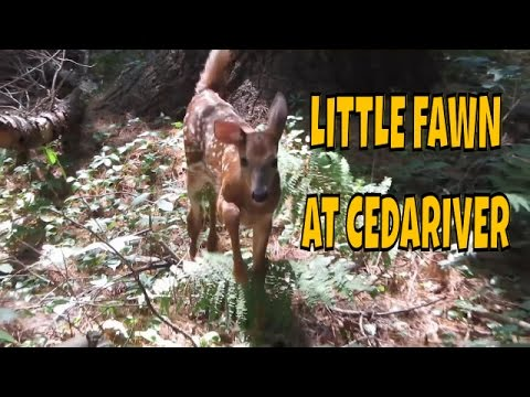 A little Fawn and a Nature walk at Cedariver ~ Trustees of Reservation