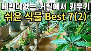베란다없는 거실(확장형 거실)에서 키우기 쉬운 식물 B…