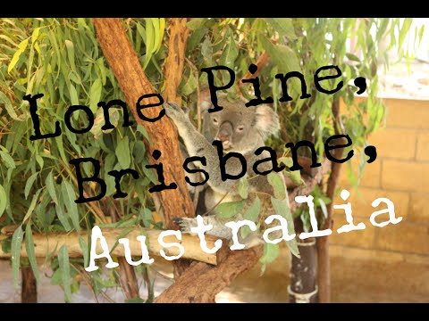 LONE PINE KOALA SANCTUARY - BRISBANE - AUSTRALIA - TRAVEL VLOG - The Adventures of Pip & Tobes