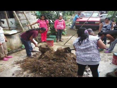 Veracruz Agropecuario - FEM Café Cosautlán Veracruz