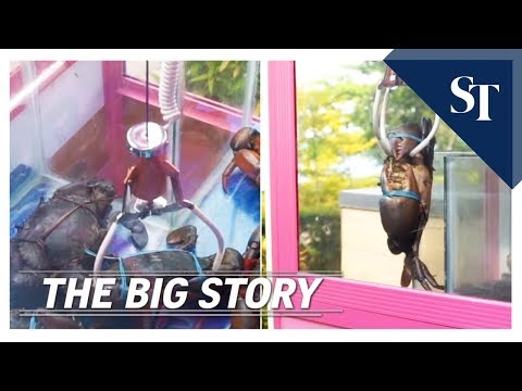 Live crab claw machine in Singapore restaurant | THE BIG STORY | The Straits Times