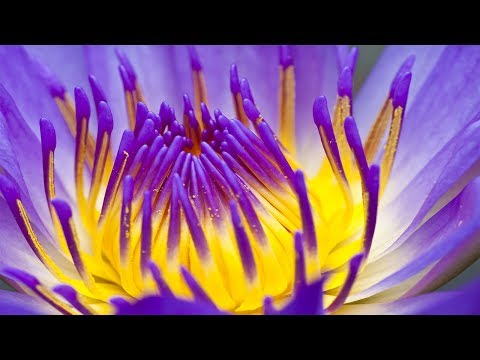 Reiki Meditation Music, Soothing Music, Relaxing Music Medit