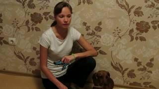 FoxisPet: Как правильно дать собаке лекарство без стресса