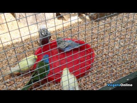 birds in the aviary take a bath - vogels in de voliere nemen een bad