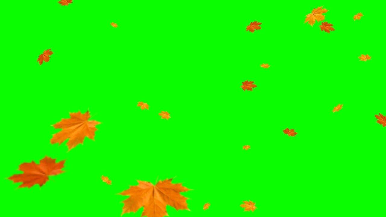 Green Screens Falling Leaves Autumn Youtube