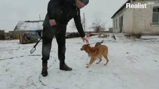 Приют домашних животных в Деремезна
