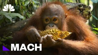 The Challenges Of Studying Endangered Species | Mach | NBC News