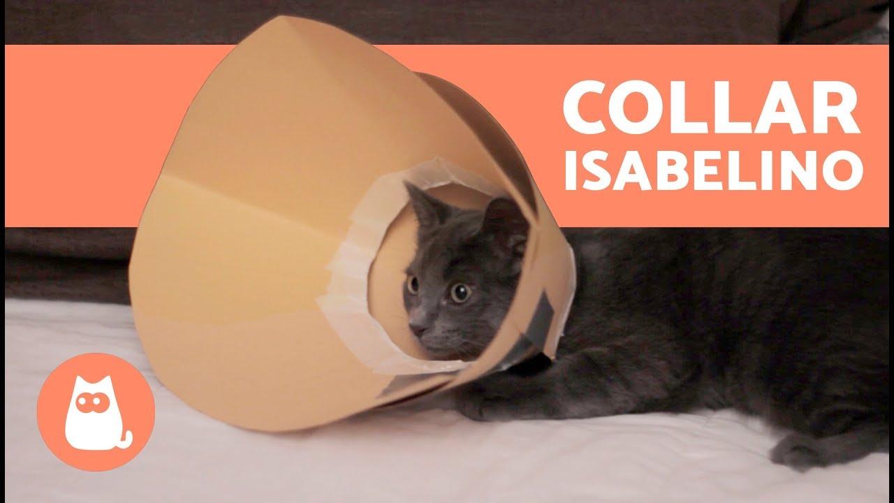 Collar isabelino casero para perros y gatos youtube for Como hacer un collar para perro