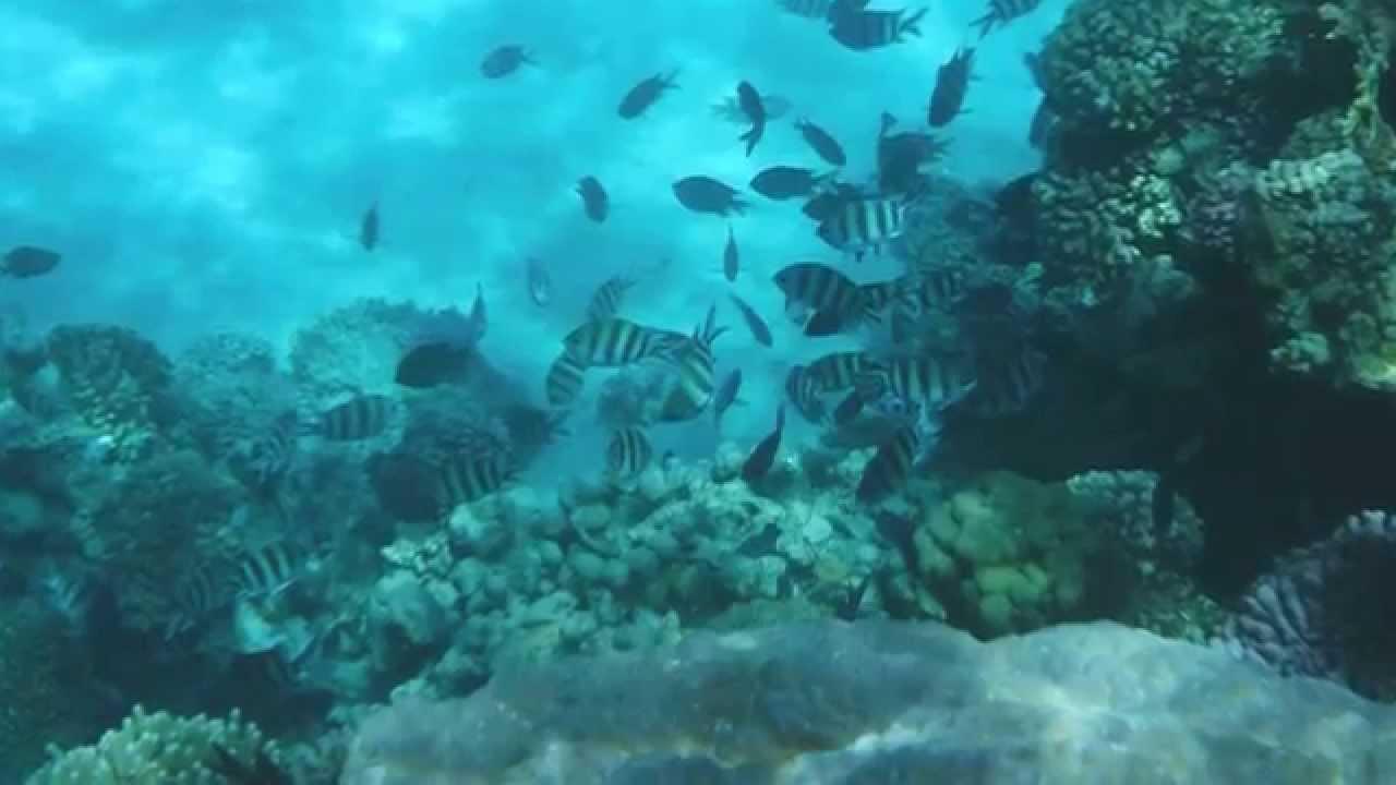 Fujifilm FinePix XP80 Underwater Shots