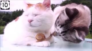 смешное видео про кошек, приколы про котов