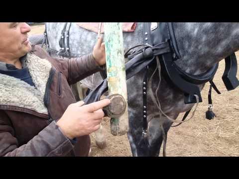 Вопрос: Конная упряжь. Что входит в конную упряжь, какие предметы?