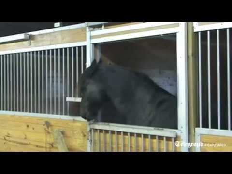 'Houdini' horse escapes from stable and frees friends