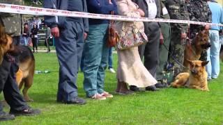 Немецкая овчарка - выставка
