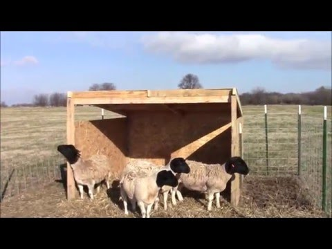 how to build a sheep shelter