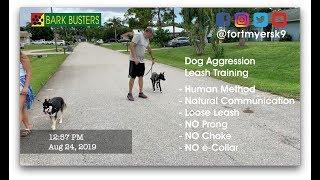 #leashaggression  #dogaggression  Dog Training of @FortMyersK9 - Best Dog Trainer