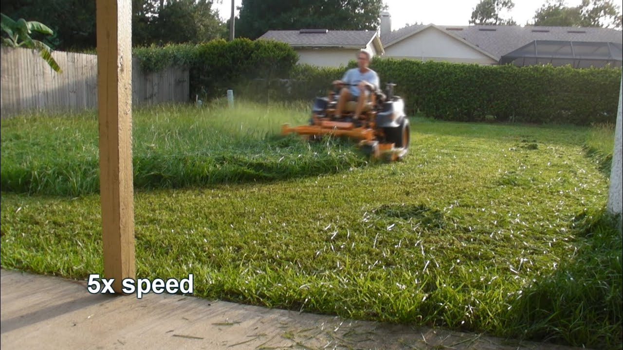 Mowing tall thick grass youtube for Tall outdoor grasses