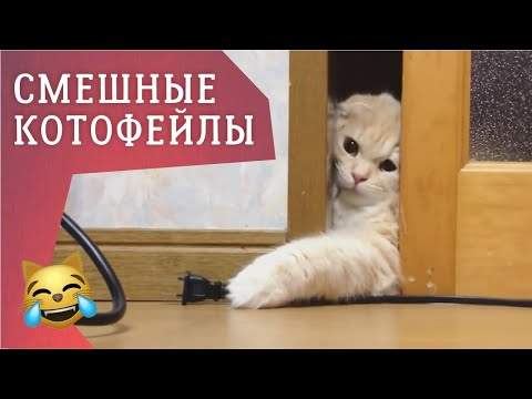 ФЕЙЛЫ #29 СМЕШНЫЕ НЕУДАЧИ И ПРИКОЛЫ С КОШКАМИ / Funny Cats