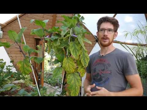 Acquaponic - Fischzucht und Gemüseanbau