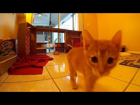36 Minutes of Funny & Cute Foster Kittens Playing - Candid Action Camera