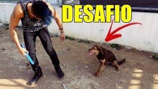 veja o que aconteceu com esse cachorro