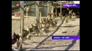 видео Где купить фазанов