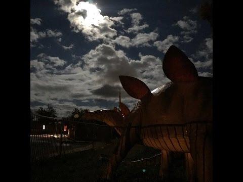 Dinosaurs and CSIRO