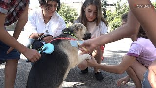 Oknooshoon  Bringing Dog Therapy to Armenia