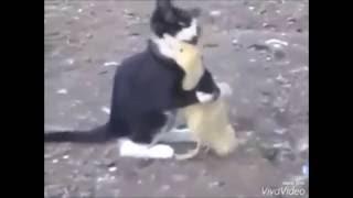 Sevimli Dövüş - Komik videolar