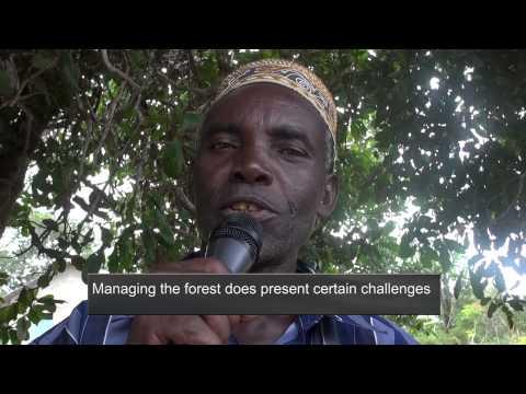 Maisha ndani ya msitu - Life in the Forest