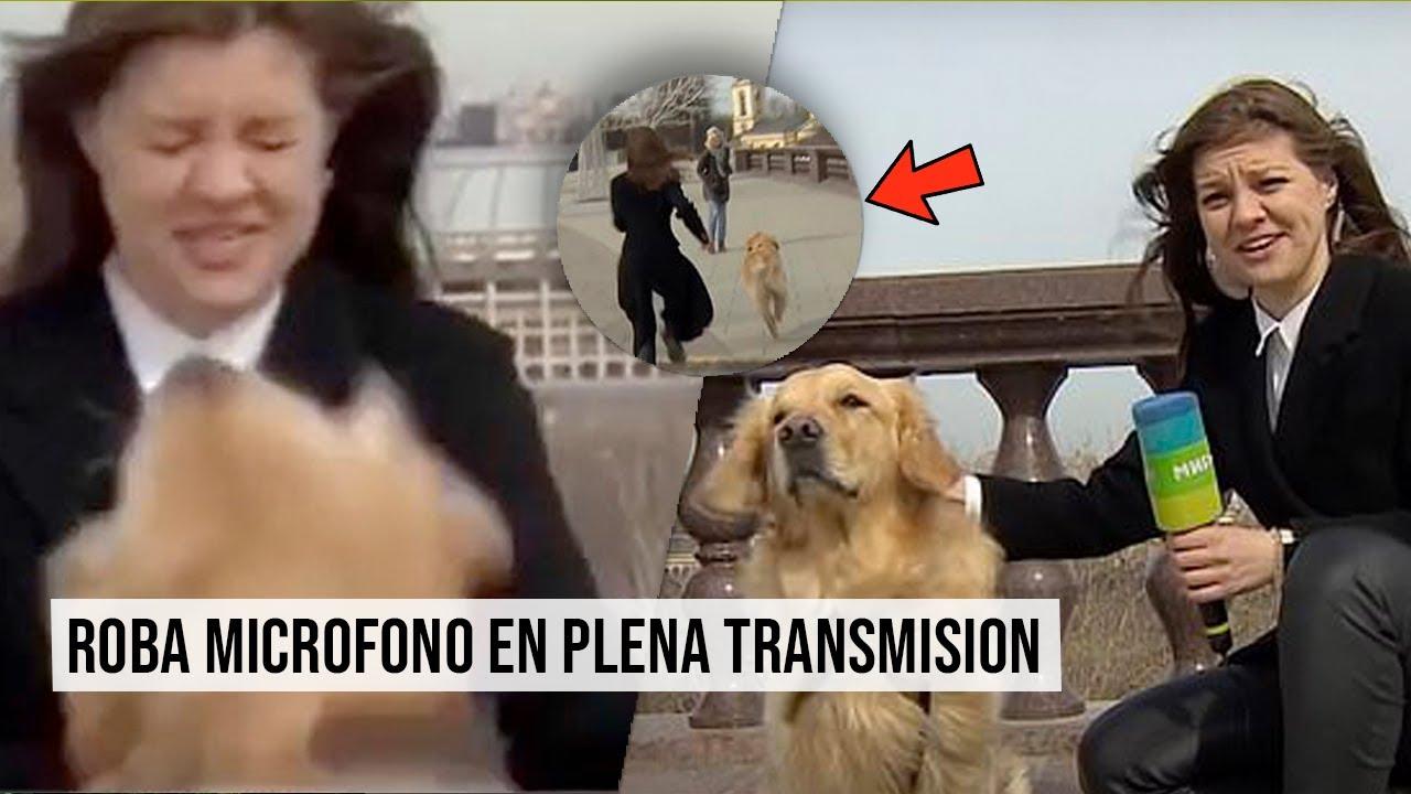 Perro ROBA MICRÓFONO de REPORTERA y huye durante una TRANSMISION en vivo